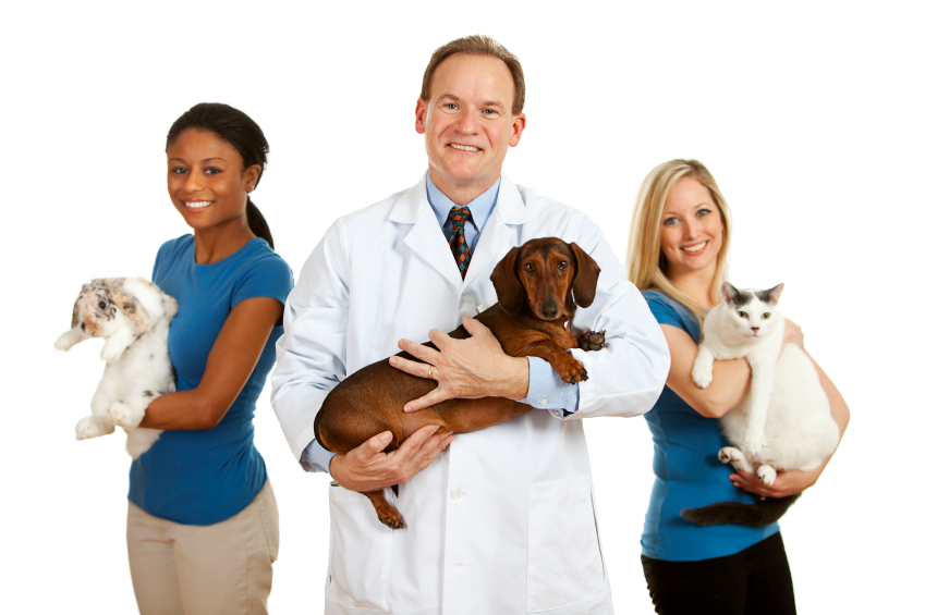 What Types Of Jobs Do Veterinarians Have