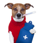 Vet Assistant Schools In Connecticut